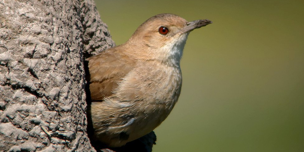 Aves de la Comarca: Muestra fotográfica en Nueva Helvecia!