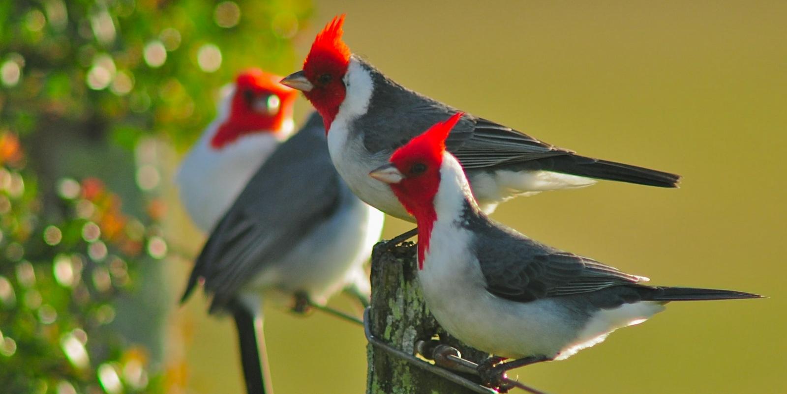 Vení a escuchar el canto de las aves!