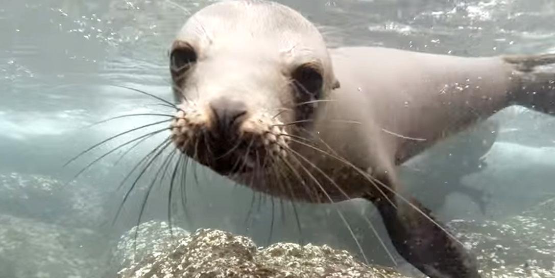 S.O.S Rescate Fauna Marina invita a liberación de loba e inauguración de museo!