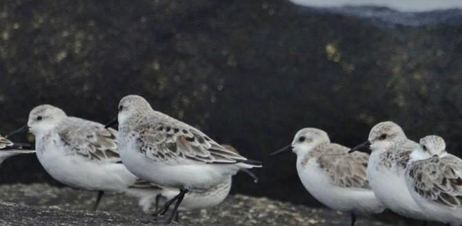 Charlas y caminatas de observación de aves